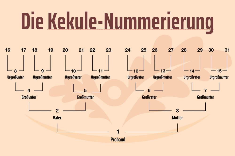 Stammbaum Kekule System Nummerierung Grafik Beispiel
