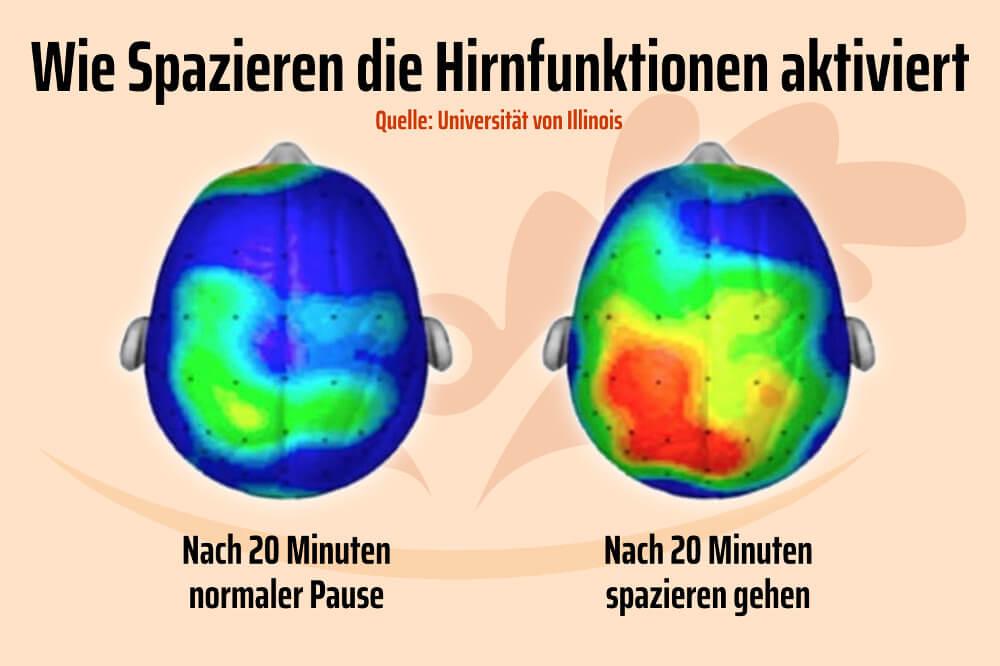 Spazieren Gehen Fit Geistig Koerperlich Hirnfunktion Studie Grafik
