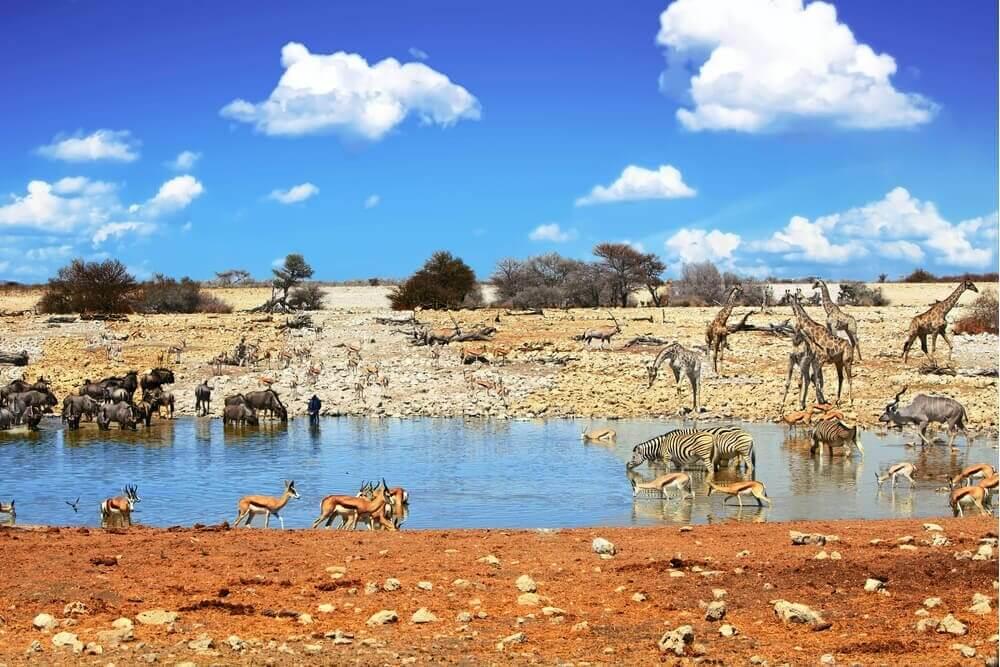 Namibia-Reiseziel-Etosha-Nationalpark-Safari