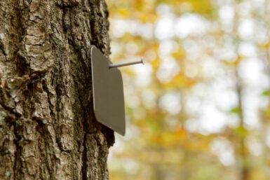 Friedwald: Letzte Ruhe in der Natur