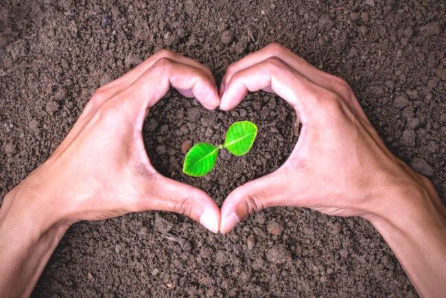 Nachhaltig leben: So gelingt es