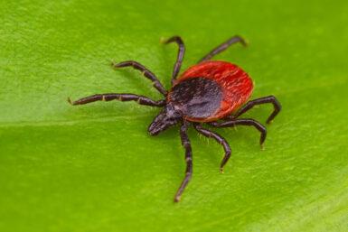 Zecken: Was Sie über die Parasiten wissen müssen
