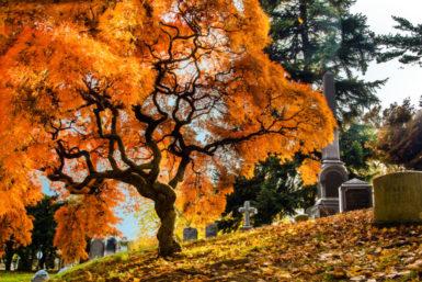 Friedhof: Angemessen die letzte Ruhestätte finden
